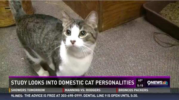 ネコは本気で人間を殺そうと企む情緒不安定な生き物に関連した画像-04