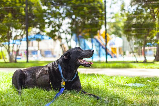 愛犬Dukeyとの最期の日を記録したアルバムに関連した画像-01