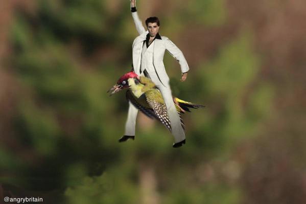 イタチがキツツキの背中に乗って、空を飛んだに関連した画像-10