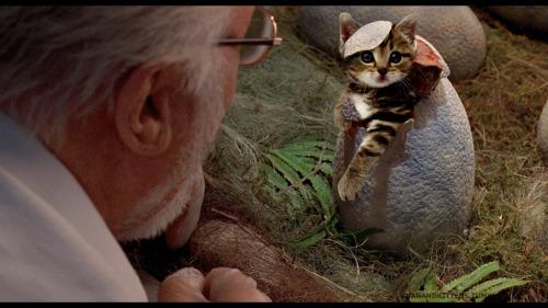 「ジュラシック・ワールド」の恐竜を猫にに関連した画像-01
