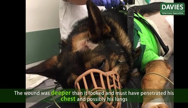 警察犬フィン君に関連した画像-05