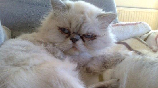 ネコたちが教えてくれる、月曜日のツラさに関連した画像-03