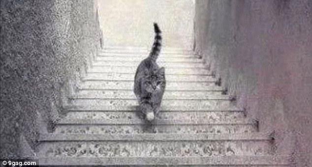 このネコ、階段を上がってるように見える?下ってるように見える?に関連した画像-05