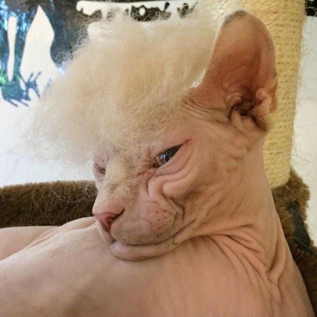 「猫かつら」装着例に関連した画像-04