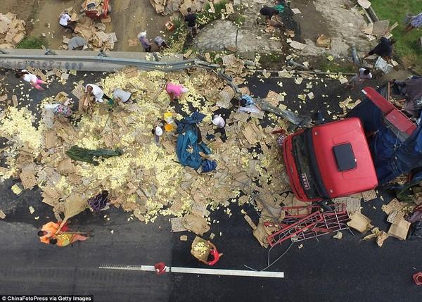 ひよこがたっぷり載ったトラックが横転に関連した画像-08
