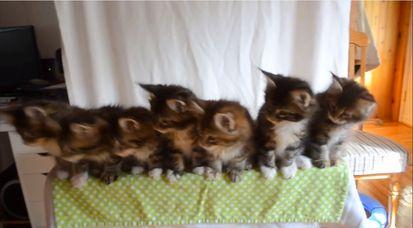 7匹の子ネコが驚異のシンクロに関連した画像-03