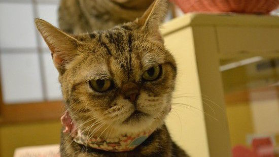 ネコたちが教えてくれる、月曜日のツラさに関連した画像-12
