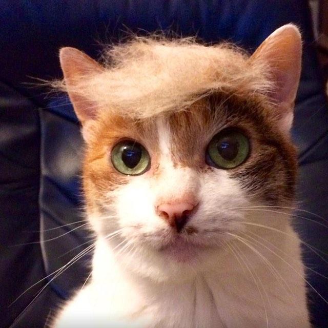 「猫かつら」装着例に関連した画像-08