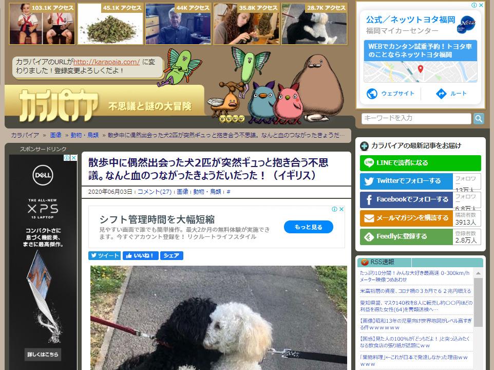犬 きょうだい 再会に関連した画像-02