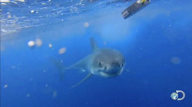 サメはAC/DCなどヘヴィメタルを好んで聴くに関連した画像-02
