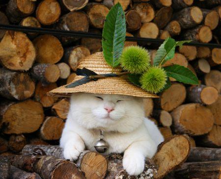 日本のネコ『のせ猫』が海外で評判に関連した画像-10