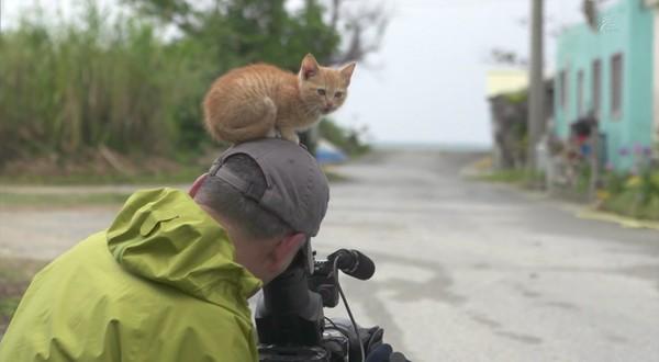 岩合光昭の世界ネコ歩き「沖縄」に関連した画像-09