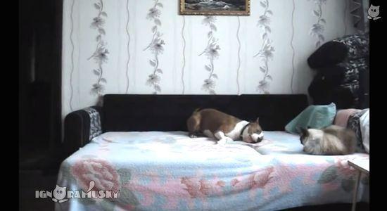 ベッドに上がることを禁止された犬に関連した画像-05