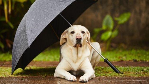 スーパー 犬 傘に関連した画像-01