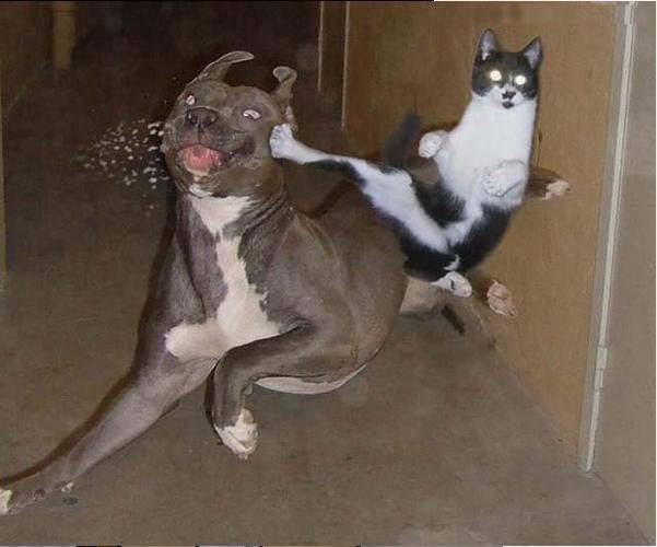 飼い主の居ぬ間に「犬と猫」がカンフー戦争に関連した画像-02