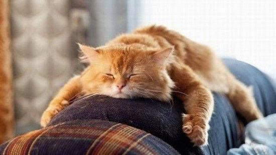 ネコたちが教えてくれる、月曜日のツラさに関連した画像-01