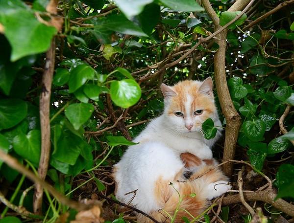 猫の巣に関連した画像-04