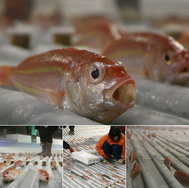 魚氷漬けスケートリンクに関連した画像-06