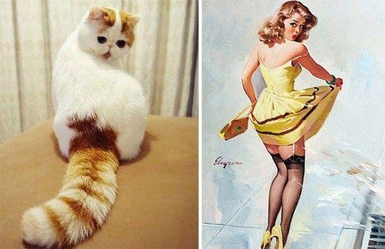 変装がうますぎるネコに関連した画像-15