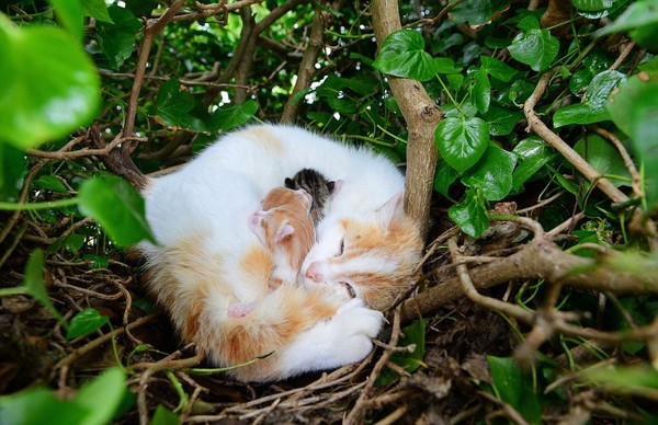 猫の巣に関連した画像-02