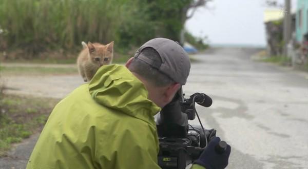 岩合光昭の世界ネコ歩き「沖縄」に関連した画像-06