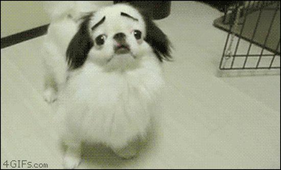 犬よりも猫の方が絶対に素晴らしいに関連した画像-17
