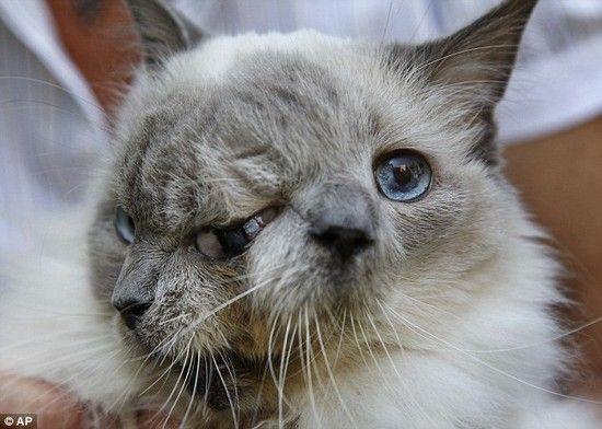 2つの顔を持つネコに関連した画像-02