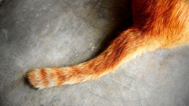 議員 猫 尻尾に関連した画像-01