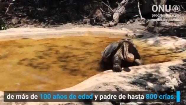 絶倫 ゾウガメ ディエゴに関連した画像-05