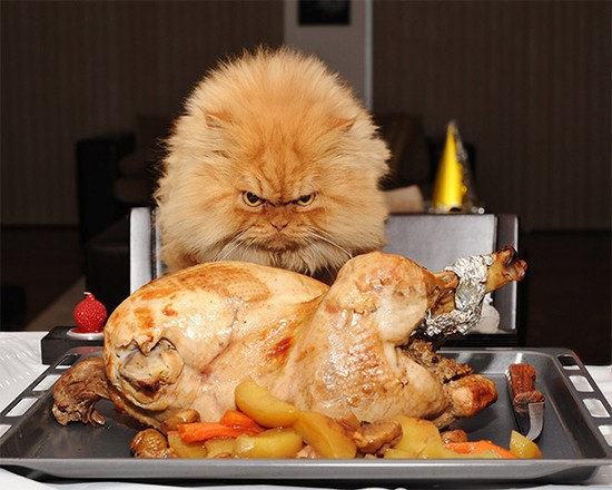 食べ物を前にヘブン状態の動物に関連した画像-15