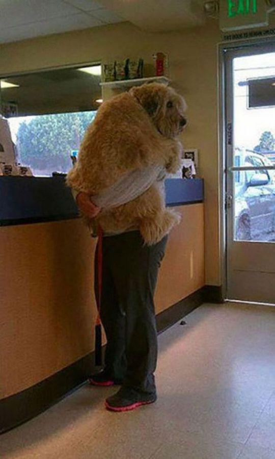 動物病院に連れてこられたペットたちの面白画像に関連した画像-05