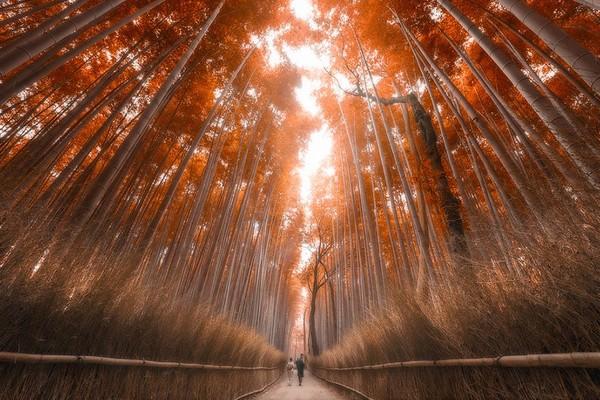 絶対に日本へ行くべきではない15の理由に関連した画像-09