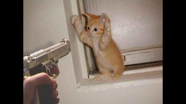 ベルギー、「ネコ」画像でテロリストを撹乱に関連した画像-11