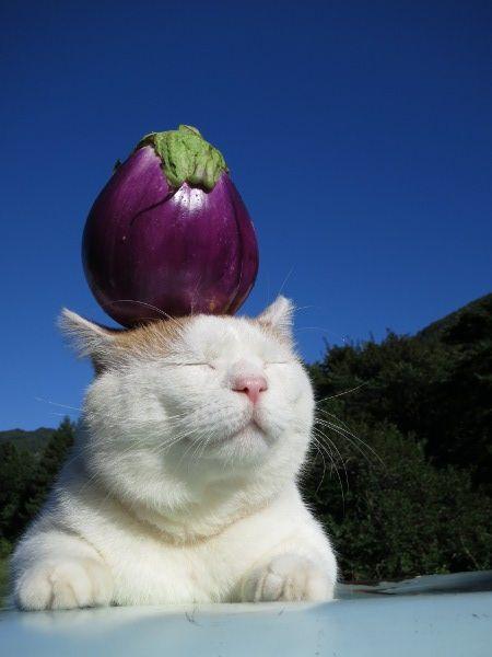 日本のネコ『のせ猫』が海外で評判に関連した画像-09