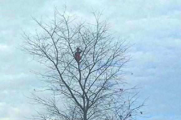 木登りに夢中の6歳児、15mまで登り自分が詰んだことに気づくに関連した画像-03