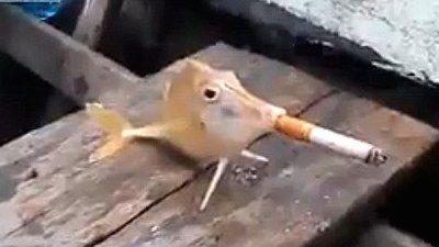 魚が喫煙に関連した画像-01