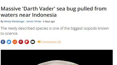 インドネシア オオグソクムシ 新種に関連した画像-02