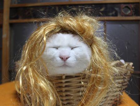 日本のネコ『のせ猫』が海外で評判に関連した画像-06