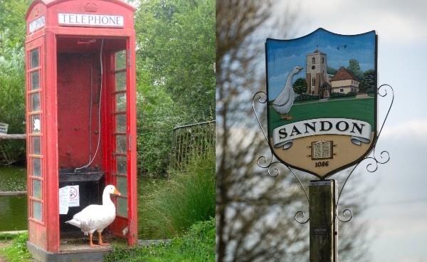 イギリスの村サンドンでガチョウ射殺に関連した画像-02
