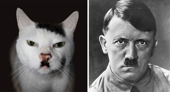 変装がうますぎるネコに関連した画像-07