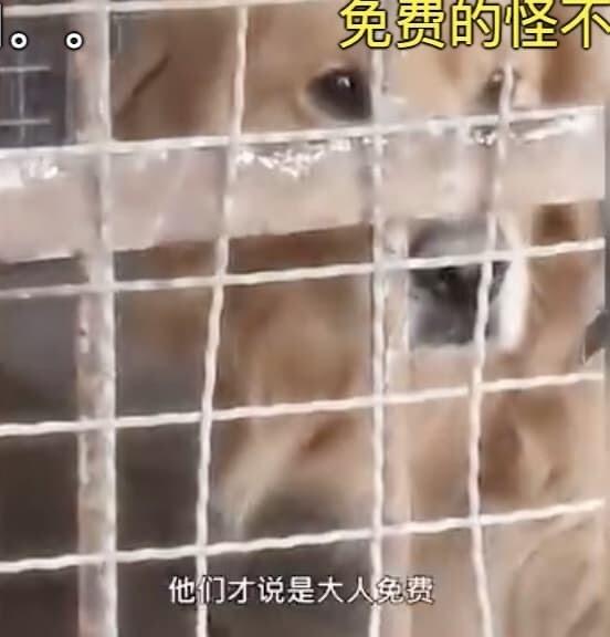 中国 動物園 ライオン ゴールデンレトリバー 犬