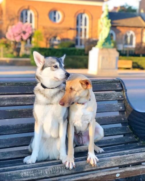 犬のマギーちゃんに関連した画像-04