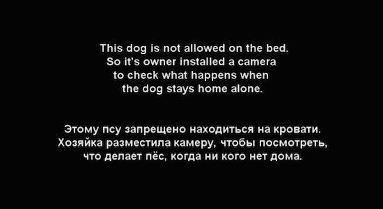 ベッドに上がることを禁止された犬に関連した画像-02