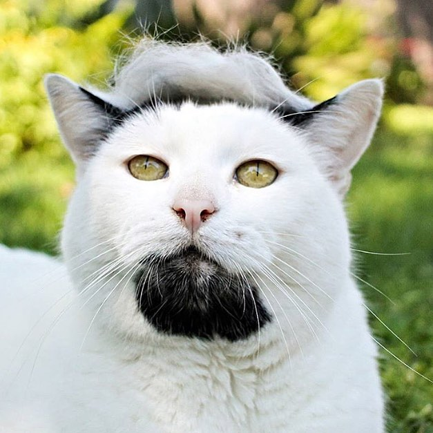 「猫かつら」装着例に関連した画像-09
