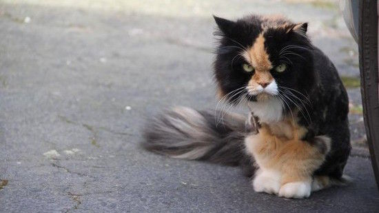 ネコたちが教えてくれる、月曜日のツラさに関連した画像-11