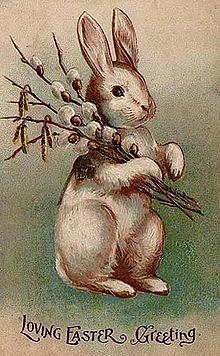 世界一大きなウサギに関連した画像-06