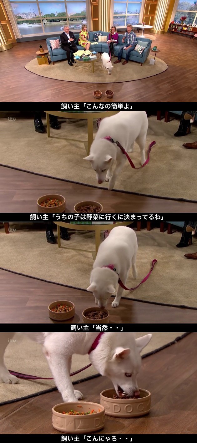 肉を食べない菜食主義の犬に関連した画像-02