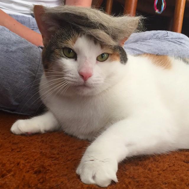 「猫かつら」装着例に関連した画像-05