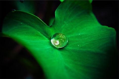 leaf-642115__340