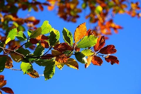 fall-foliage-2822593__340